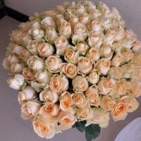 Růžovo bílé růže