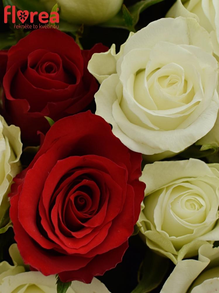Kytice 100 míchaných růží