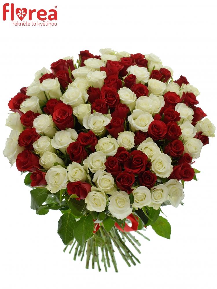 Kytice 100 růží - míchané bílé a rudé růže