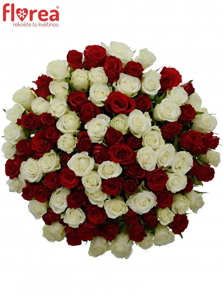 100 míchaných růží - rudé a bílé růže v kytici