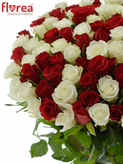 Kytice 100 míchaných růží - 50 bílých a padesát rudých růží