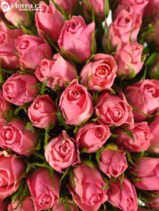 Kytice 100 růžových růží Ace pink