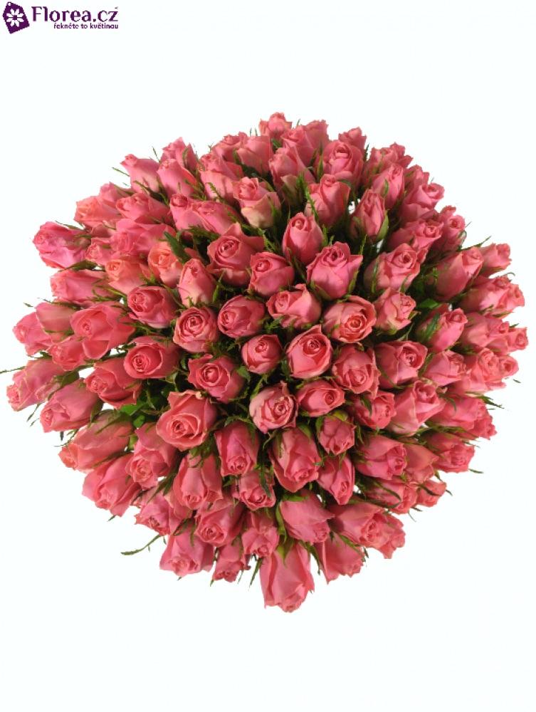 100 růží ace pink