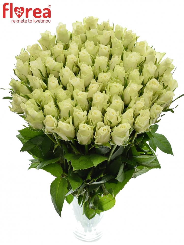 100 bílých růží Athena v kytici