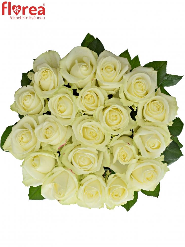 Metrové bílé růže