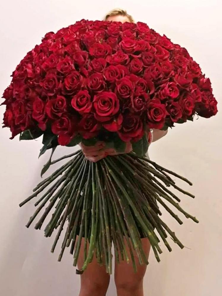 Metrové růže, velké růže s krásnými květy
